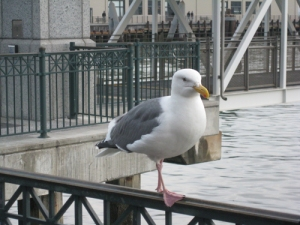 our seagull friend